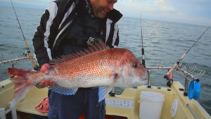 snapper fishing Tackle , snapper , snapper rig, fishing