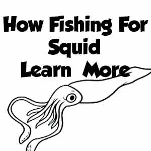 How To Catch Squid , squid fishing , squid jig, squid jigs , squid tackle , how to jig , catching squid,fishing