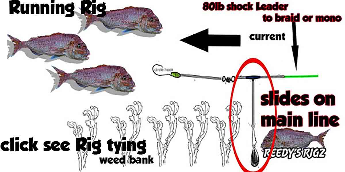 fishing rig tying , running rig , diagram fishing rig