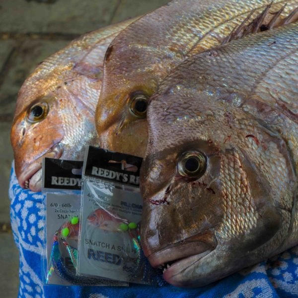 snapper , fishing , tackle , fishing rigs, Melbourne snapper