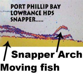 snapper on a Sounder, fish finder snapper image, image snapper sounder, Lorance hds Snapper, snapper , fishing , port phillip bay snapper